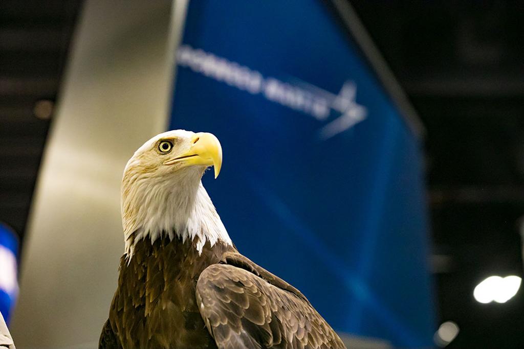 65 - Bald Eagle in Exhibit Hall
